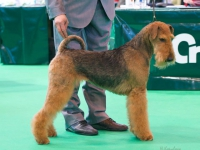 KL Spicy Cherry (Keera) BOB-Crufts-2014