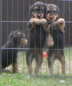 Kolm kutsika